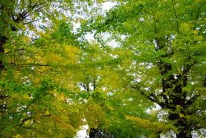 tokyo nominoichi autumn