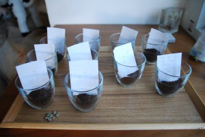 coffee cupping 1